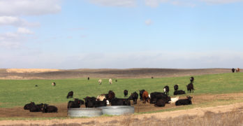 Kansas cattle operation sells for $8,343,000 in Schrader auction