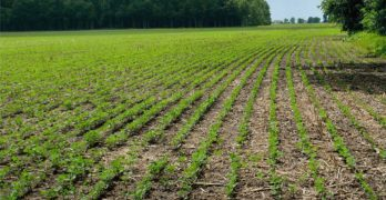Indiana farmland auction brings prices over $10,000 per acre